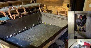 """Maus-tratos: Polícia Militar fecha """"rinha de galos"""" que funcionava nos fundos de um bar no bairro Itaipava em Itajaí"""